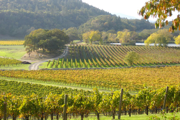 joseph phelps vineyards 10 Must See Wineries to Visit in Napa Valley
