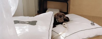 Westin Verasa Napa dog friendly hotel Pawsport Napa Valley