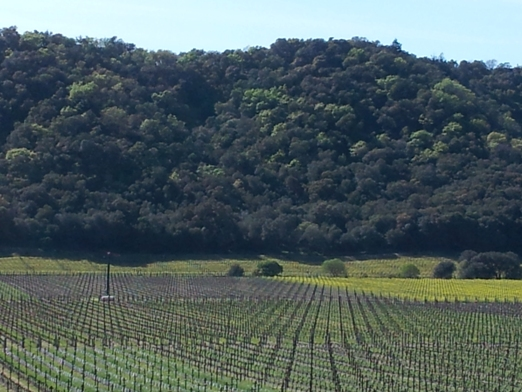 Stags Leap Winery Planning a Wine Tour in Napa Valley