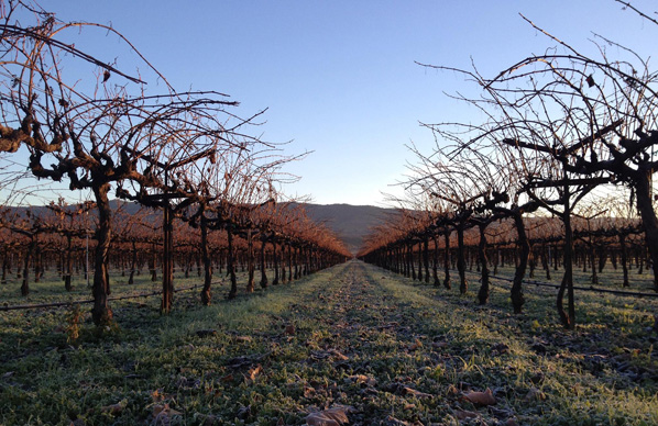 Winter in the Vineyard at Trefethen Family Vineyards
