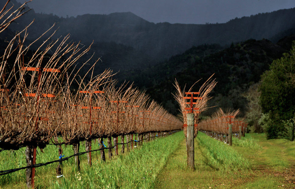 Eisele Vineyard is the Heart of Araujo Estate Wines Located in the Calistoga AVA