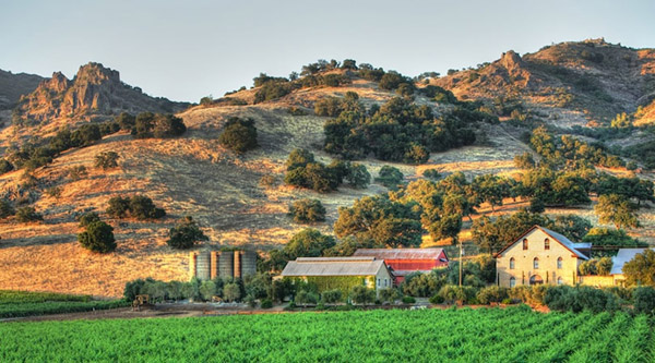 Regusci Winery3 Napa Valley: Award Winning Wines from a Diverse Appellation
