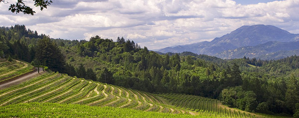 Spring Mountain District Napa Valley: Award Winning Wines from a Diverse Appellation