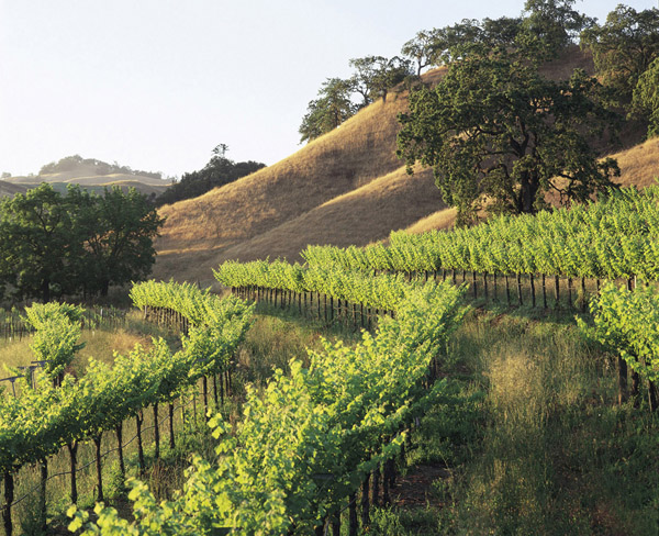 A View of the Vineyards at Beringer Vineyards