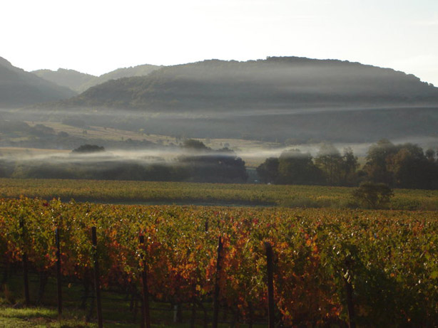 Coombsville Appellation Napa Valley: Award Winning Wines from a Diverse Appellation, Part 3