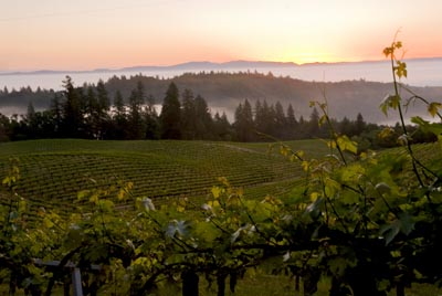 Mount Veeder District