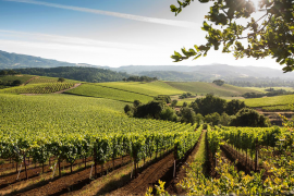 sonoma valley wine tour package